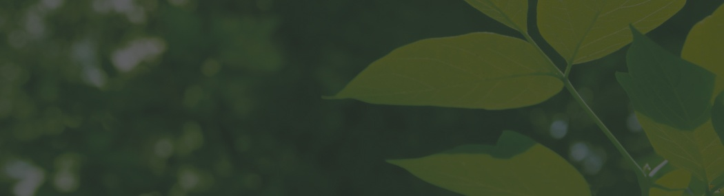 Green 3.jpg